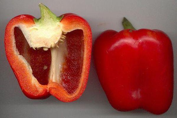 красный бык сорт перца
