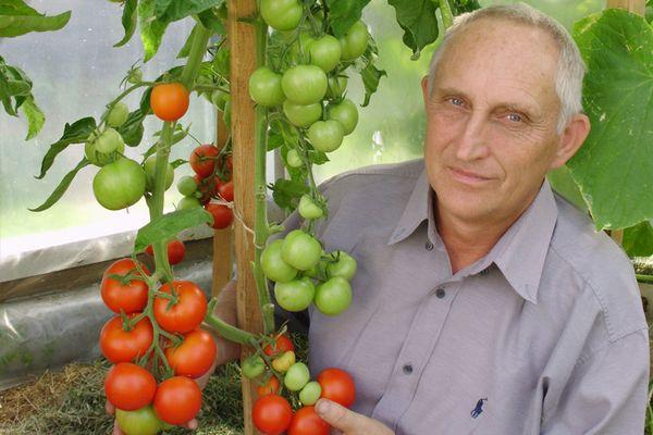 томаты выращивание сортов