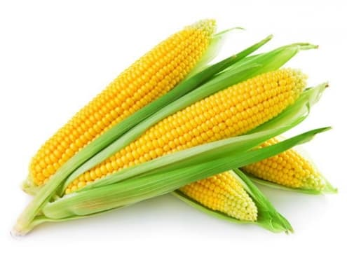 красивая сахарная кукуруза