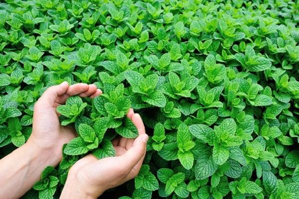 растения производится