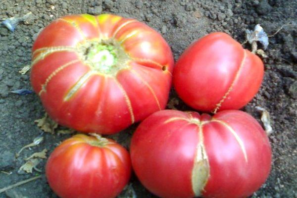 томаты уход за ним