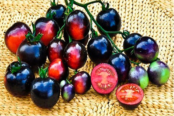 томат сорт черная гроздь