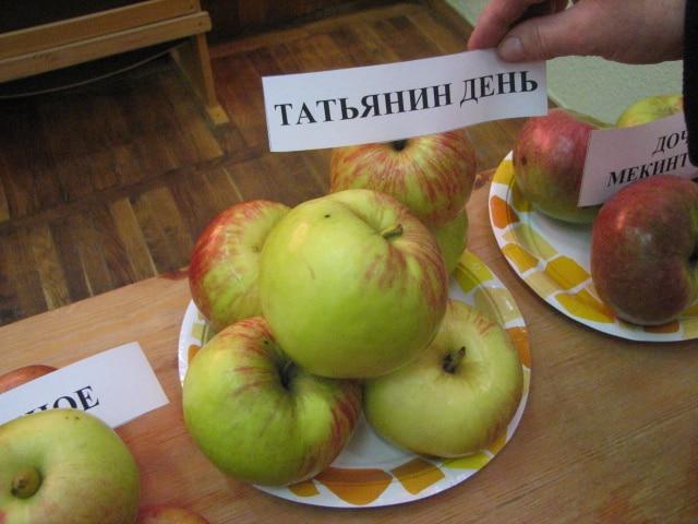 яблоня татьянин день