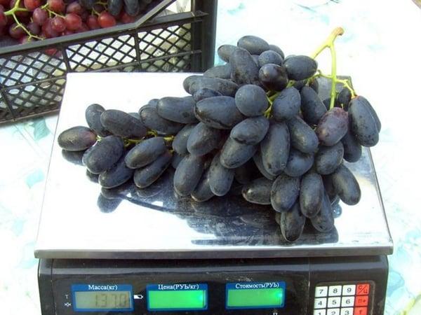 виноград велика на весах