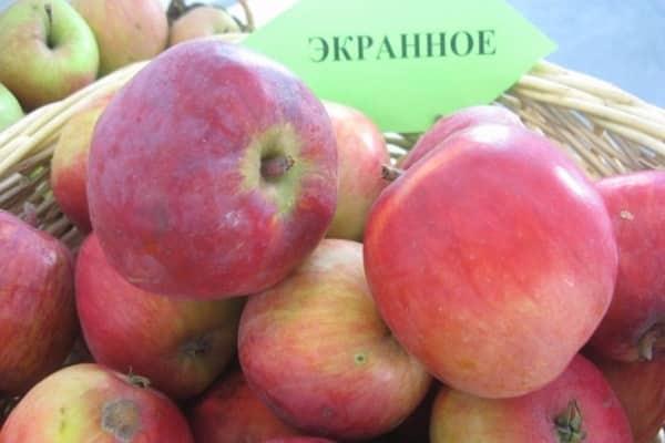особенности яблони