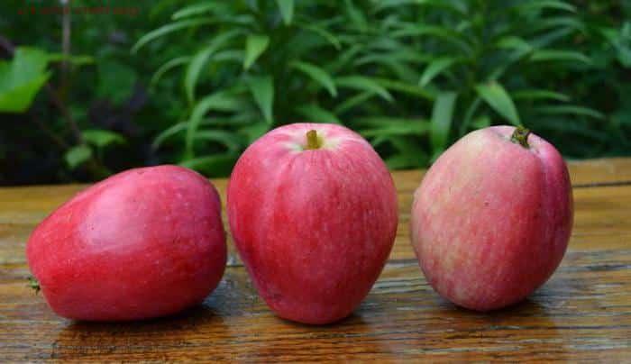 яблоня летнее полосатое