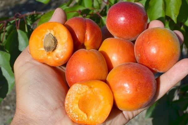 оранжеватая структура
