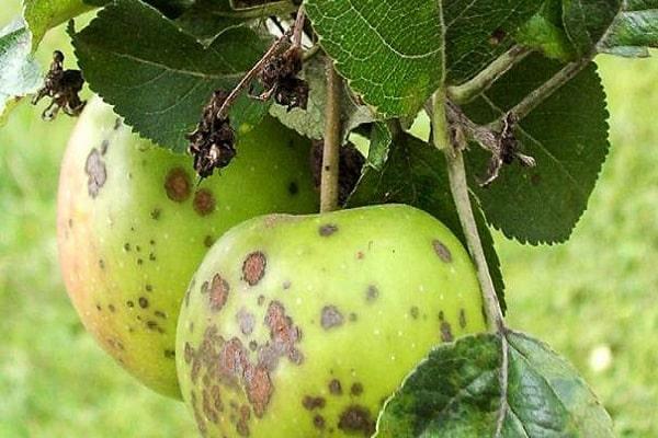 повреждены плоды