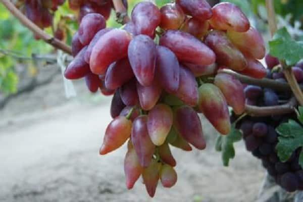 сформированная гроздь