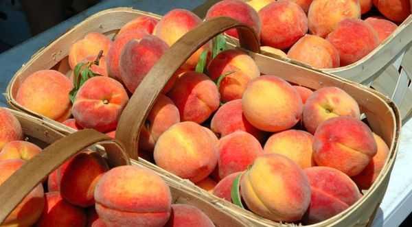 хранение персиков
