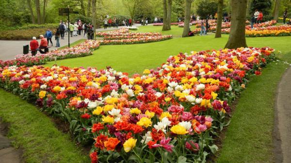 как красиво посадить тюльпаны Дизайн