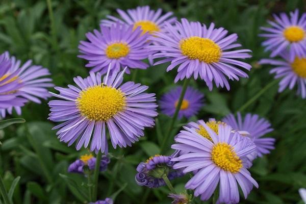 цветение на клумбе