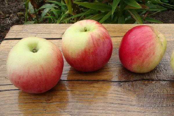 яблочки на столе