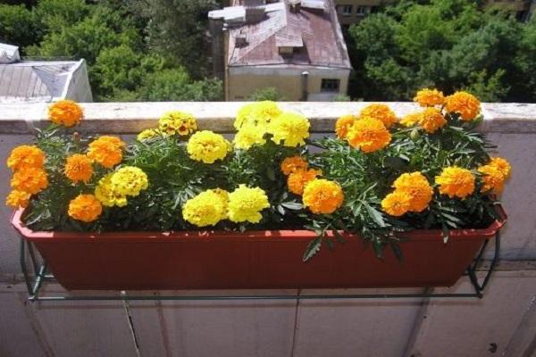 горшок на балконе