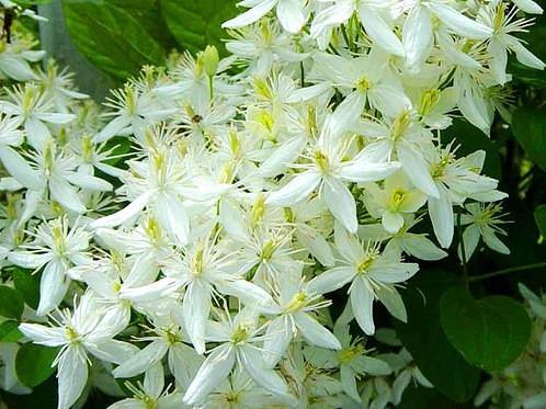 цветы на грядке