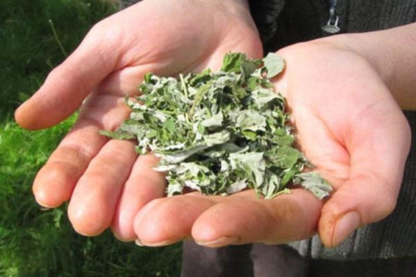 сушеные листочки
