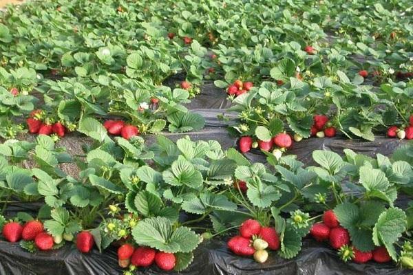 выращивание по системе