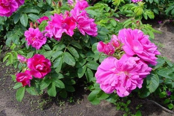 выращивать цветы