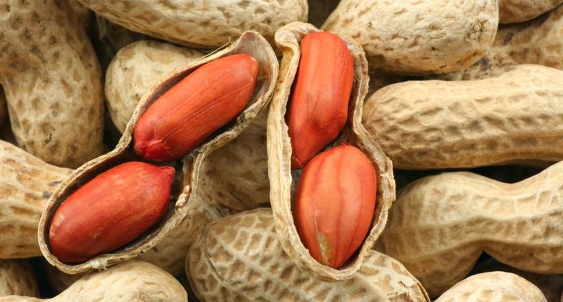 спелые орехи