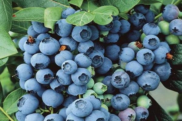 кислые плоды