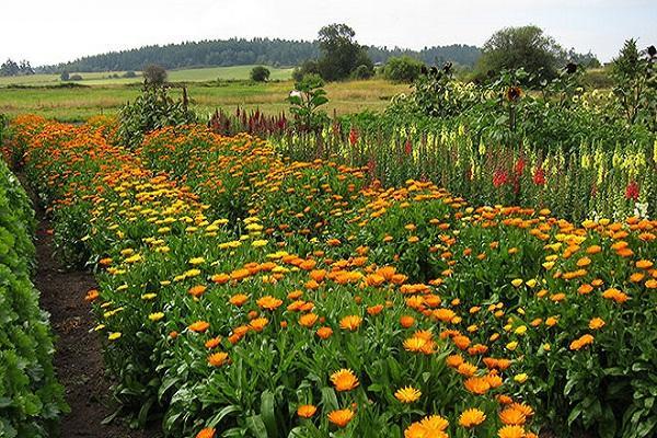 выращивание на даче