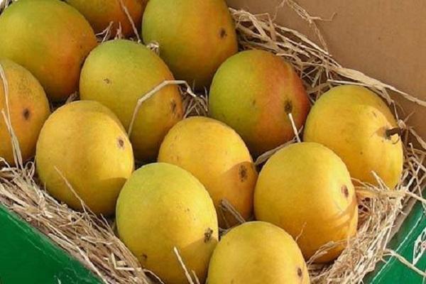 описание манго