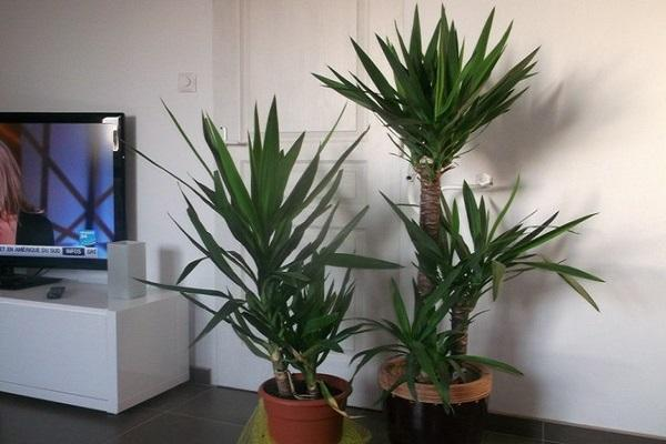 растения у телевизора