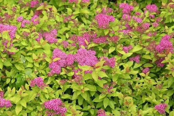 цветущие растение