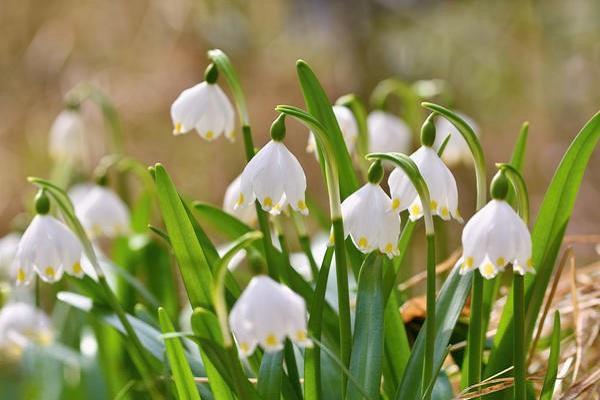 Цветет цветочки