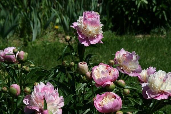 цветет растение