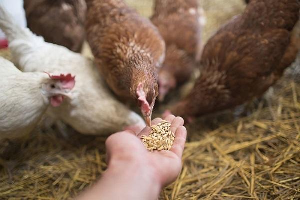 минералы для птицеводства