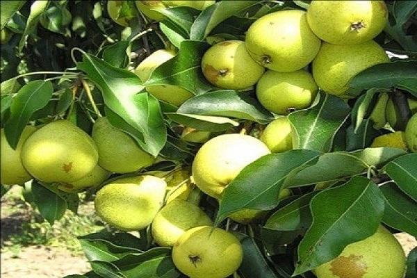 фруктовые лампочки