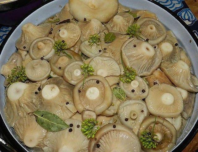 засол грибов