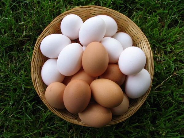 Куриные яйца разного оттенка