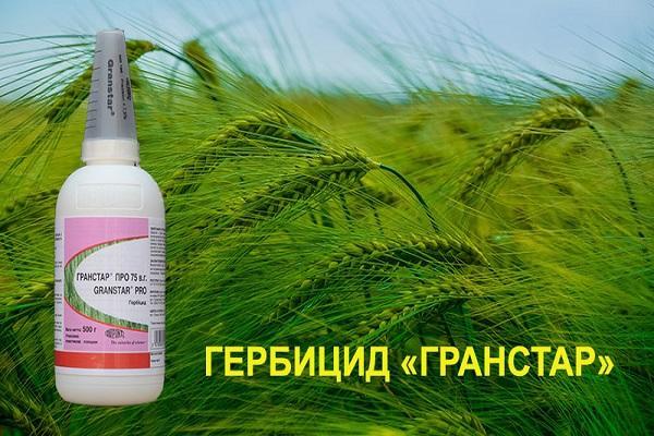 гербицида гранстар