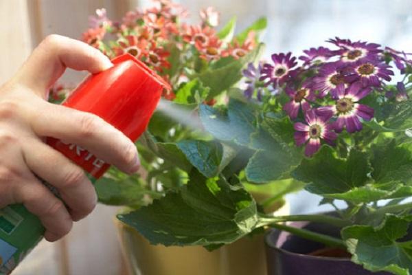 опрыскивать цветок