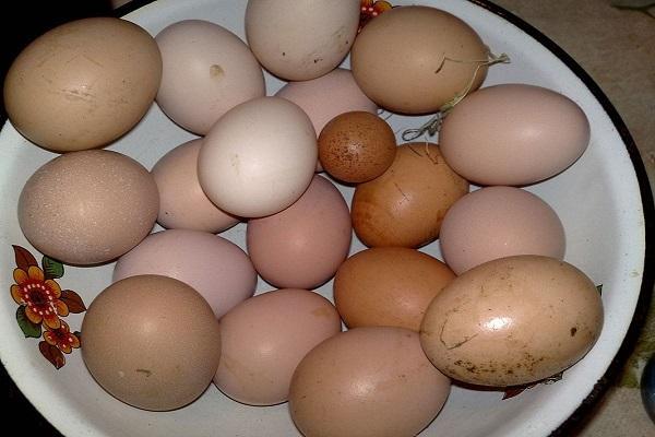 По каким причинам куры иногда несут мелкие яйца и как лучше решить проблему