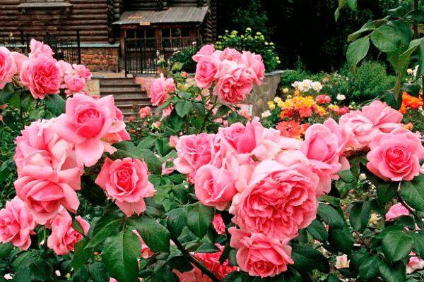 растение цветочное