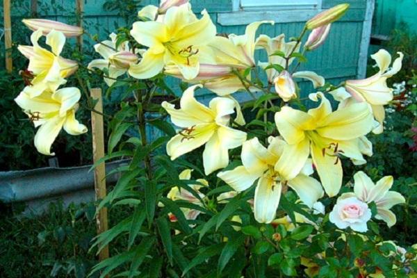 цветок яркий