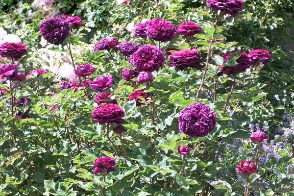 цветения цветка