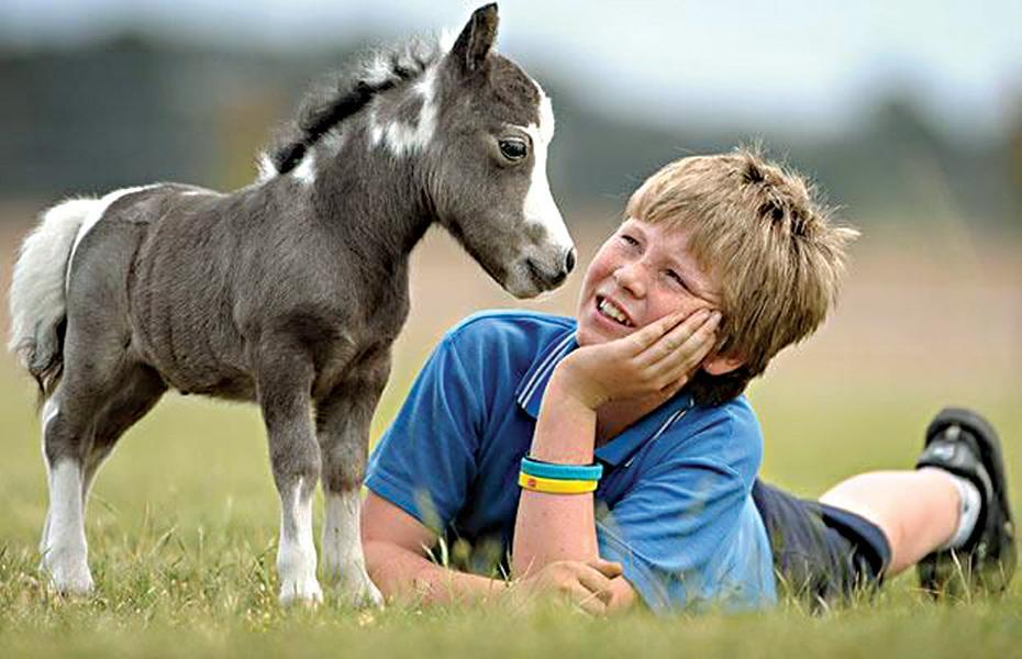 мини лошадь