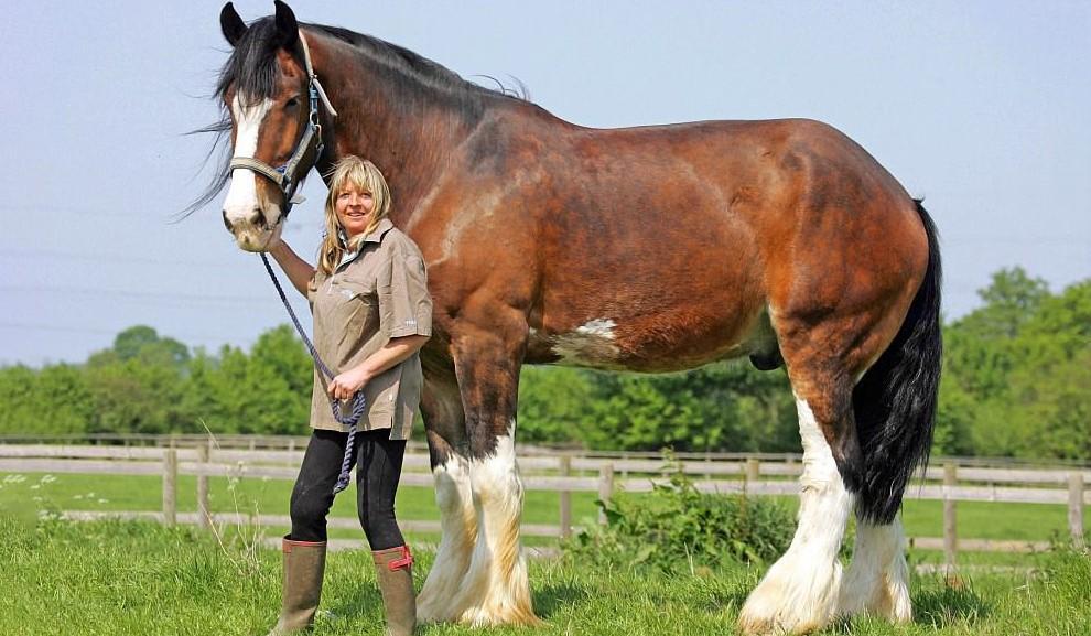 большая лошадь