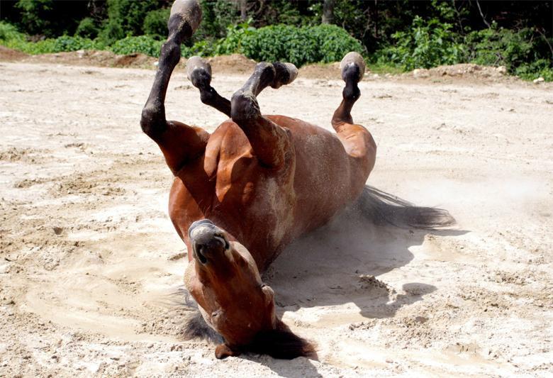 больно коню