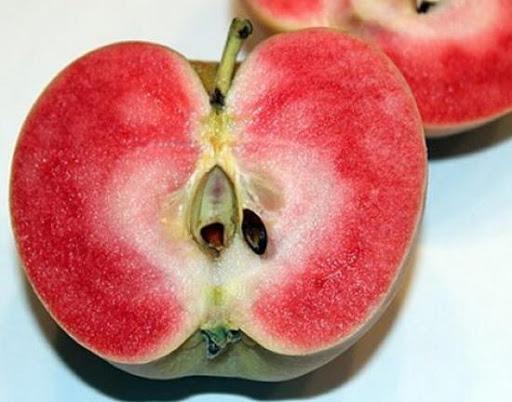 яблоко розовый жемчуг