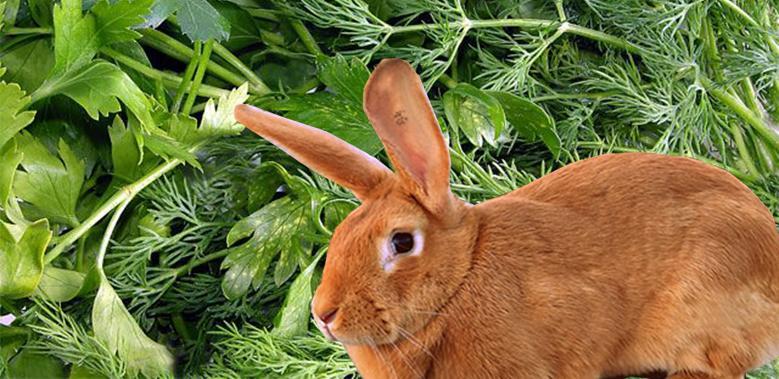 петрушка кролю