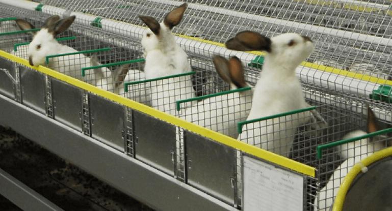много кролей