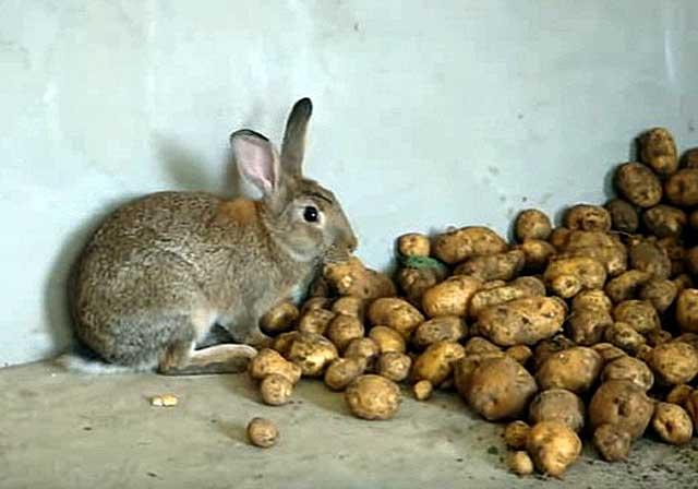 картошку кролику