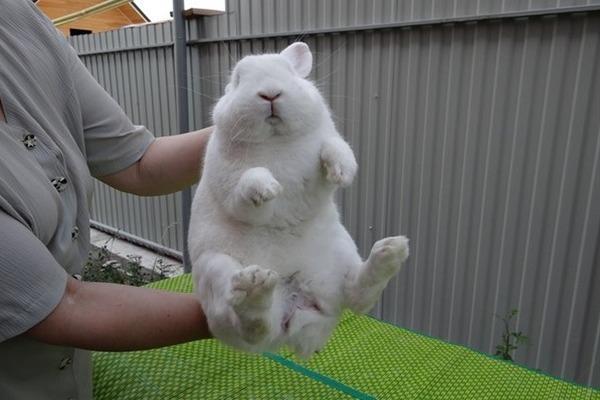 большой кроль