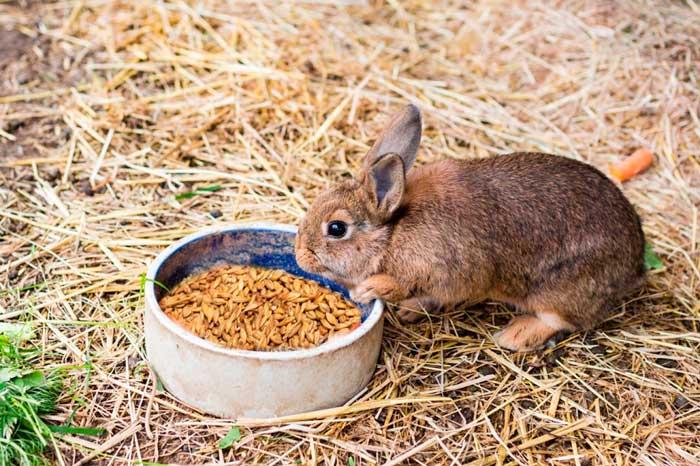 пшеницу кроликам