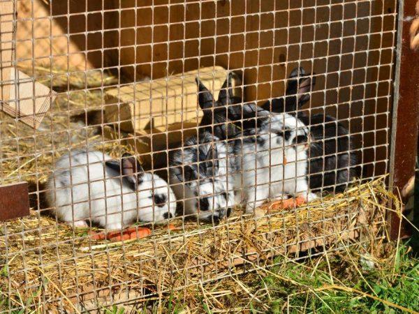 кролики в клетке